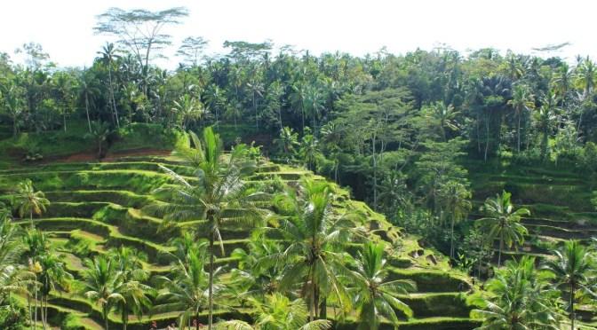 Wandering Ubud: The Streets, Markets, & Rice Fields