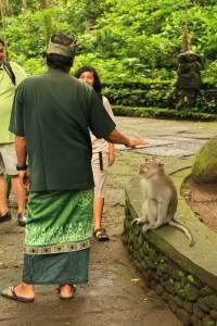 Tamer of the Monkeys