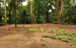 Monkey Grave Site