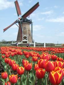 Windmill-Optimized